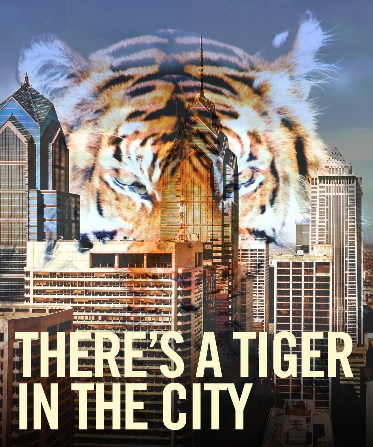 Tiger In The City